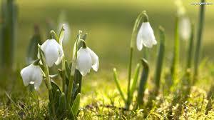 kołdra na wiosnę